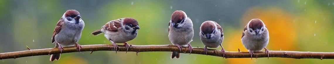 Naturfotografie: Vögel auf Ast