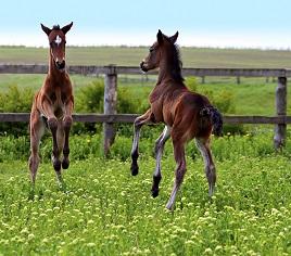 Naturfotografie: Pferde spielen